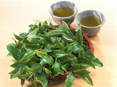 Green Tea Leaf --- Image by © Studio Eye/Corbis