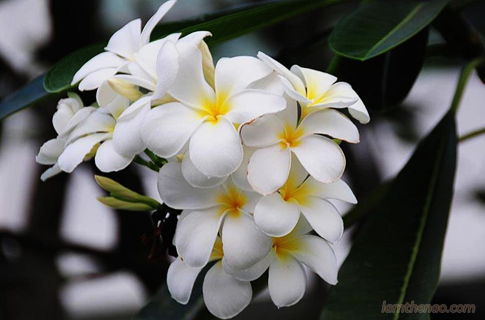 Bạn có biết những loại hoa kiêng không đặt lên bàn thờ?