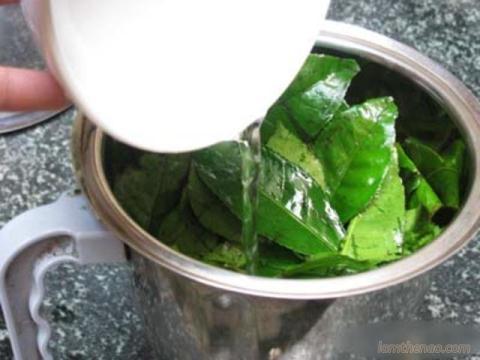 công dụng lá trà xanh